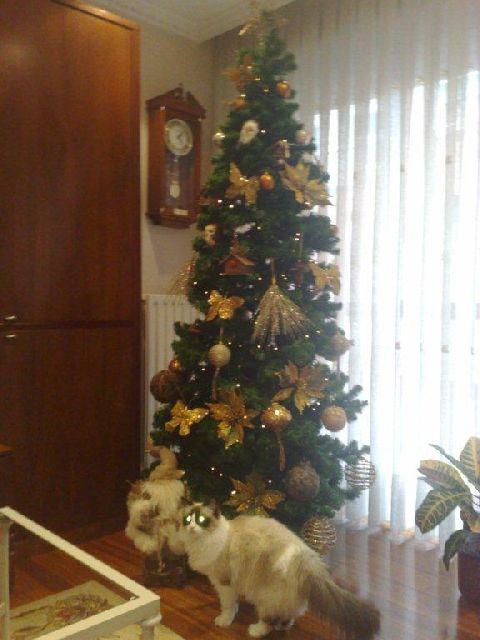 Ugly Christmas Tree.Mundanacity Good Bad And Wickedly Ugly Christmas Trees 2009